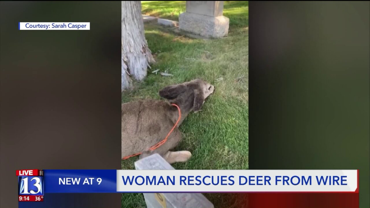 Caught on camera: Utah woman rescues deer trapped in wire at cemetery