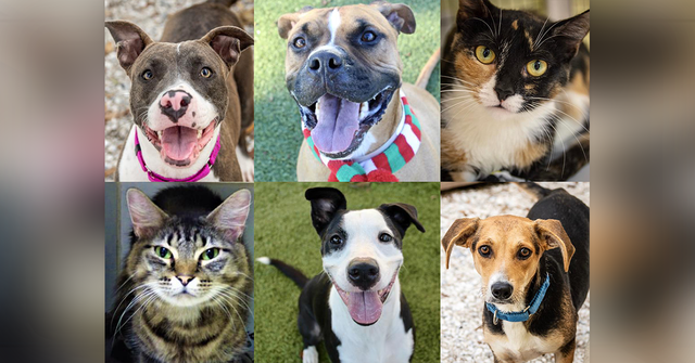 PHOTOS: 20 adoptable pets in the Tampa Bay area for the weekend of December 7