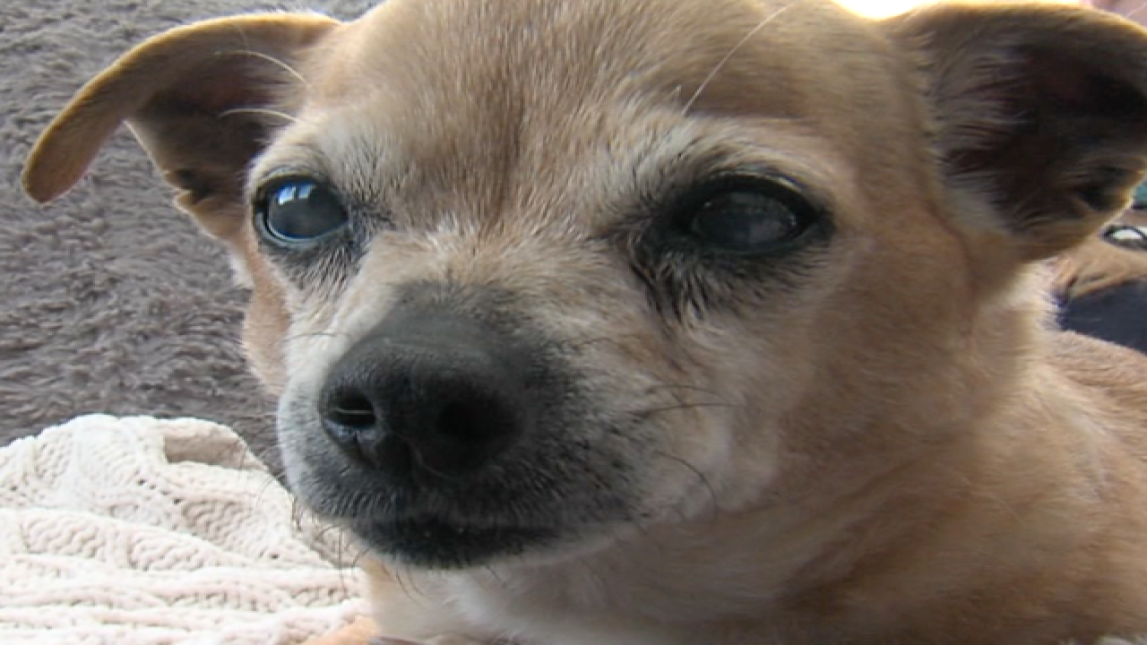 Pet hospice care helps owners say goodbye