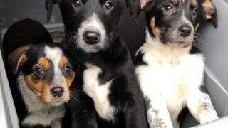 adorable puppies.jpg