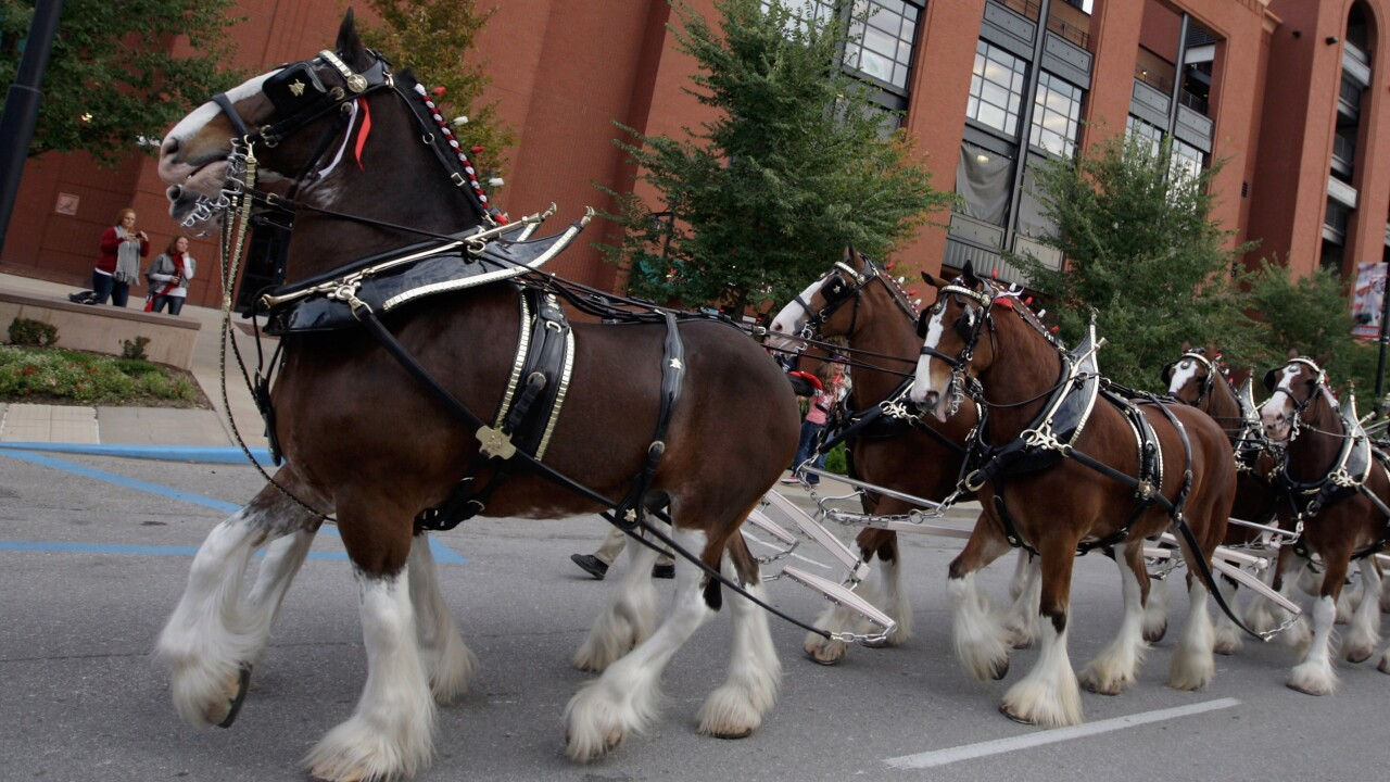 Budweiser Clydesdales are coming to Utah to hold 'funeral' for 3.2% beer