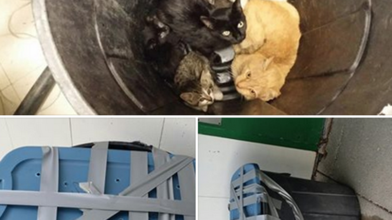 Garbage can full of cats dropped at shelter