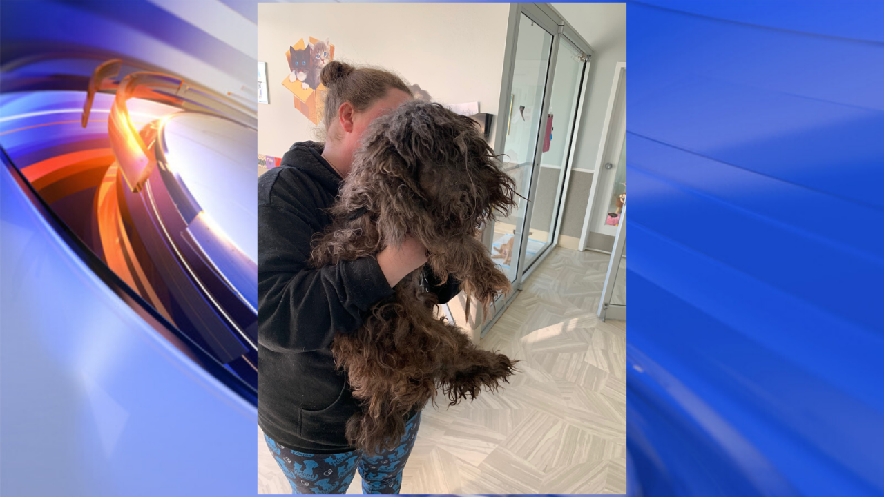 Local rescue removes almost 9 lbs of matted hair from shih tzu, who has now found foreverhome