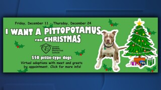 PittoPotamus.jpg