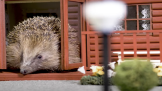 UK Resort Has A Mini 'holiday Park' For Hedgehogs To Hibernate
