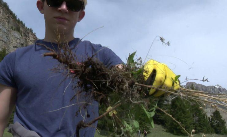 weed puller.jpg