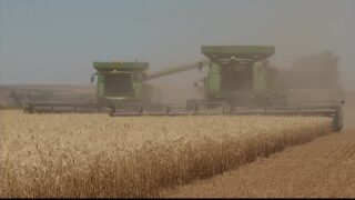 Montana Ag Network: Mexico an important market for MT wheat and barley farmers