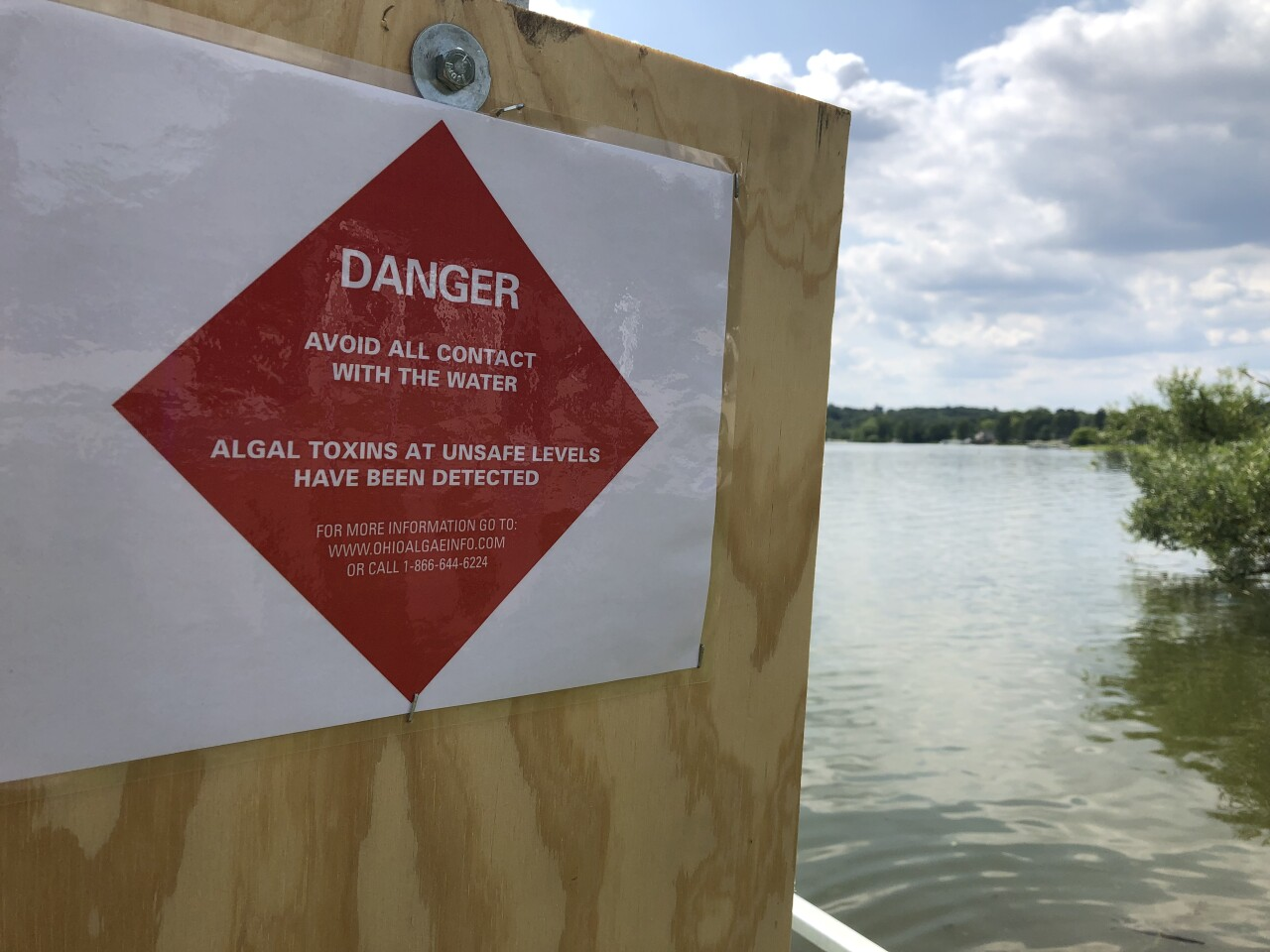 Algal bloom in Springfield Lake