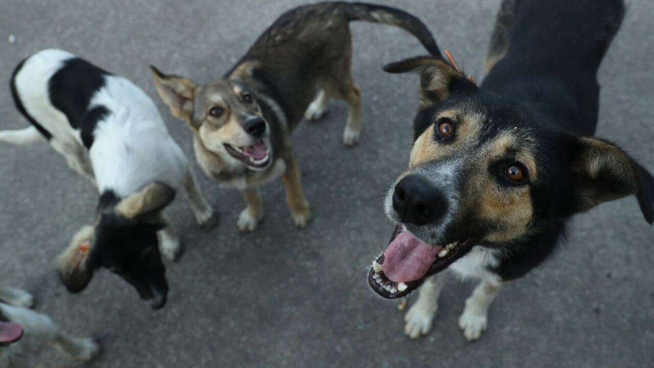 North Carolina is latest state to propose electronic animal abuse registry