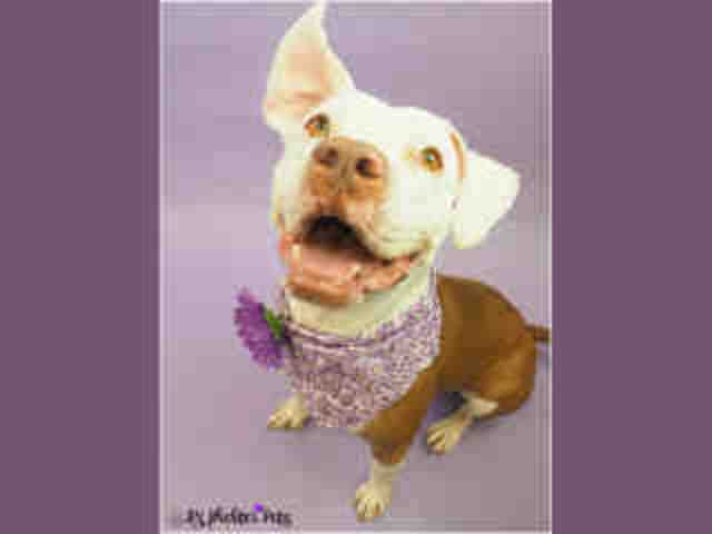 Adoptable pets from Maricopa County Animal Care and Control and Arizona Humane Society (10/18)