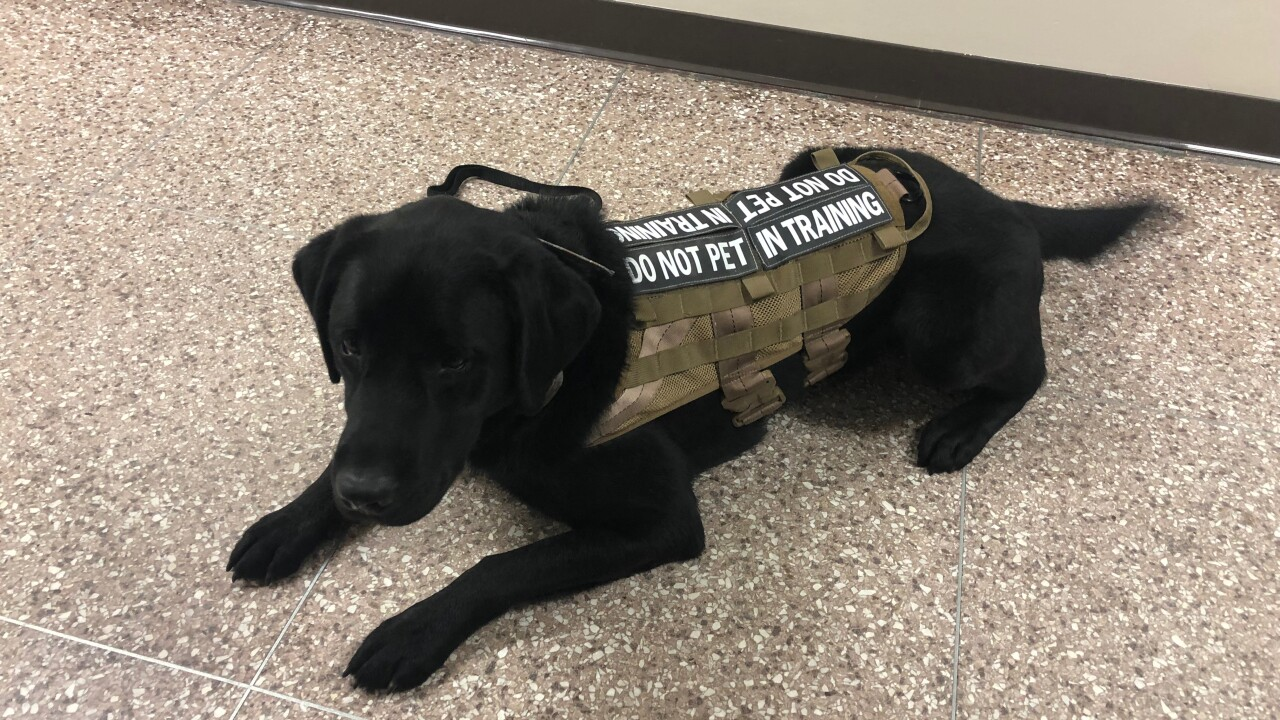 A service dog's mission after its handlerdies