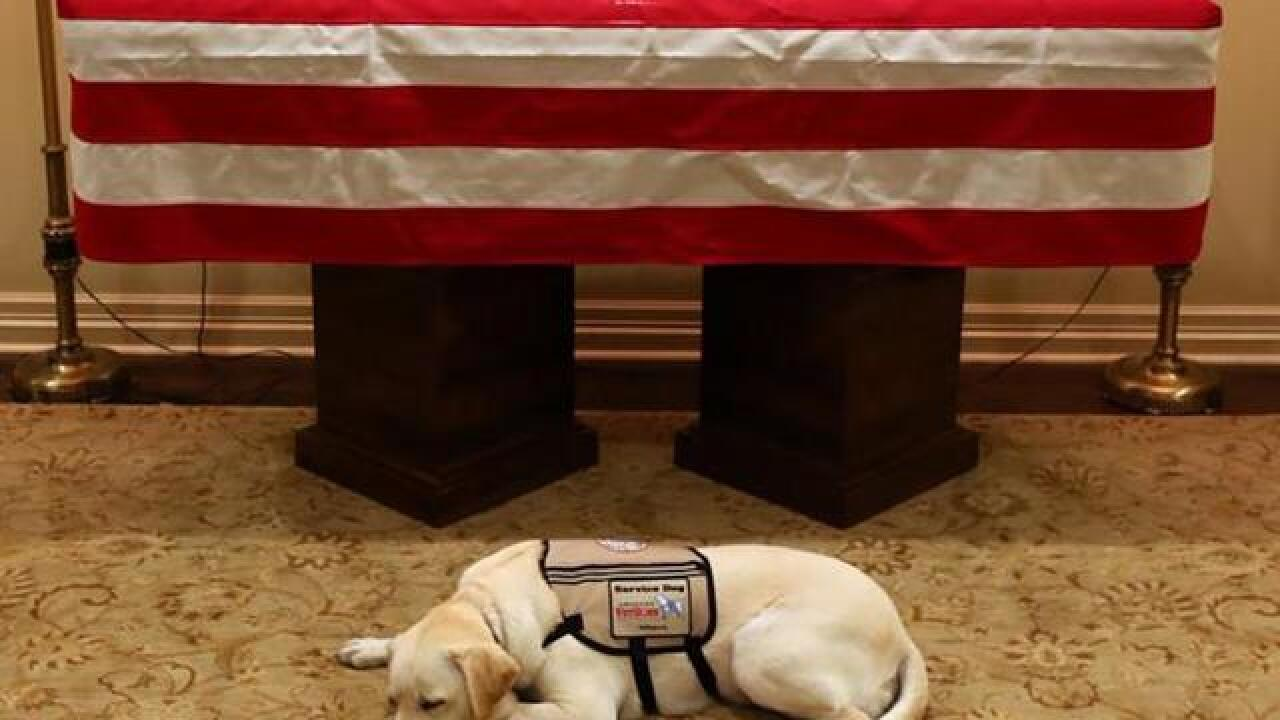 'Mission complete': Sully the service dog accompanies Bush one last time