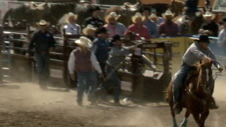 2020-02-17 Rodeo-bulldogging3.png