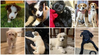 Puppies from Surf's Up Puppy Shack diagnosed with parvovirus.