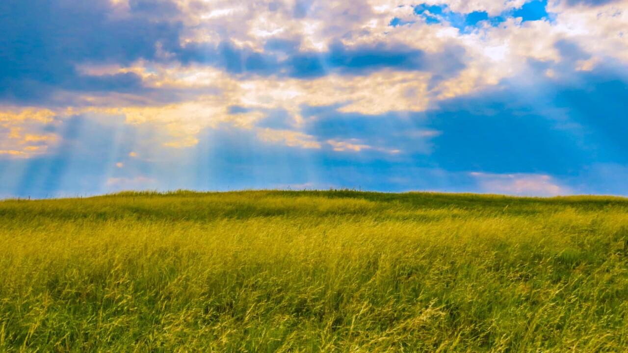 Falcon Plains