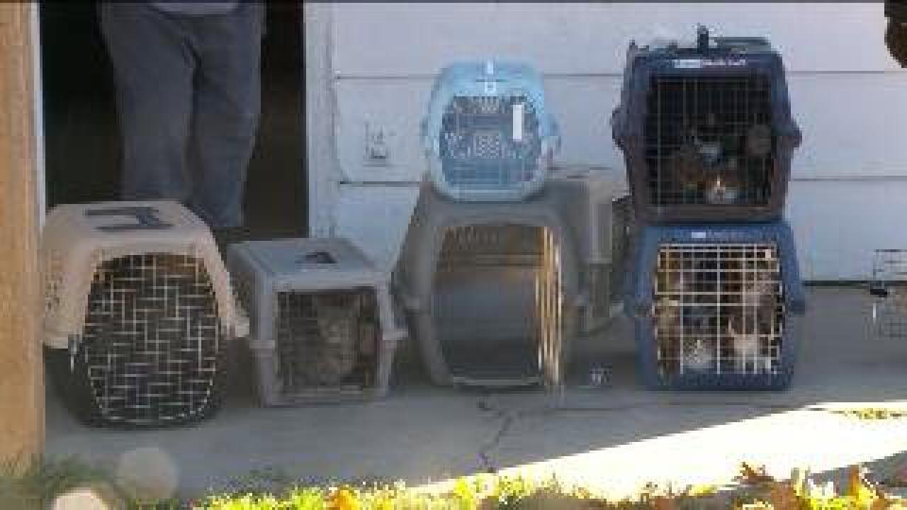 Nearly 40 cats rescued from Brigham City apartment