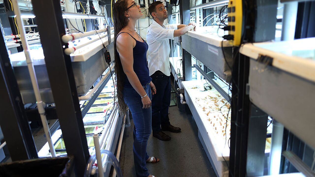 University Of Miami Studies Climate Change Effects On Coral Reef