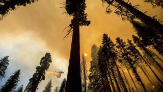 AP Images California trees.jpeg
