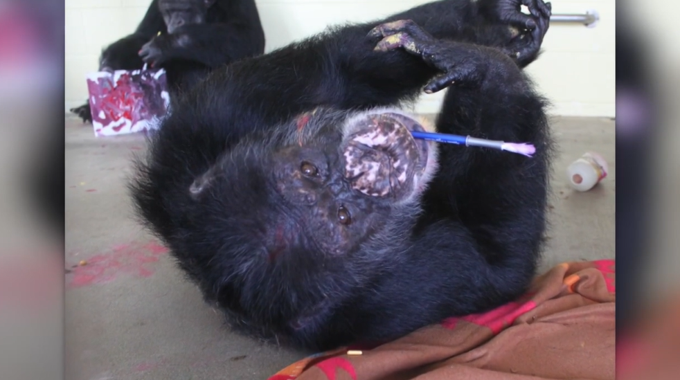 Chimp.PNG