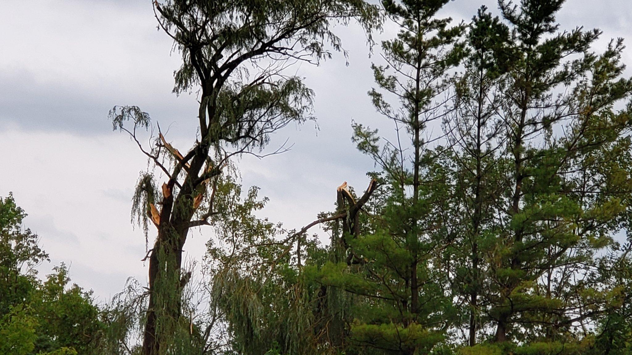 Tree-Damage.jpg