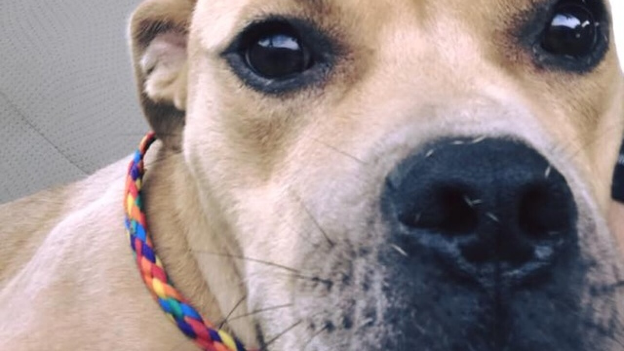 After public outcry, puppy will not return to home of man acquitted of abuse