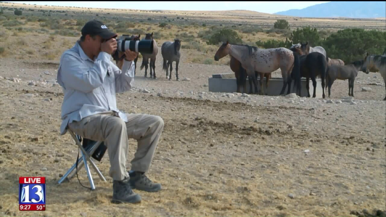 Uniquely Utah: Finding peace among wild horses