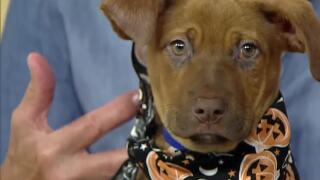 Blend Extra: Pet Safety During Halloween