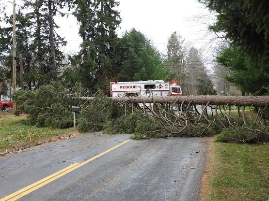 shaes fallen tree.jpg