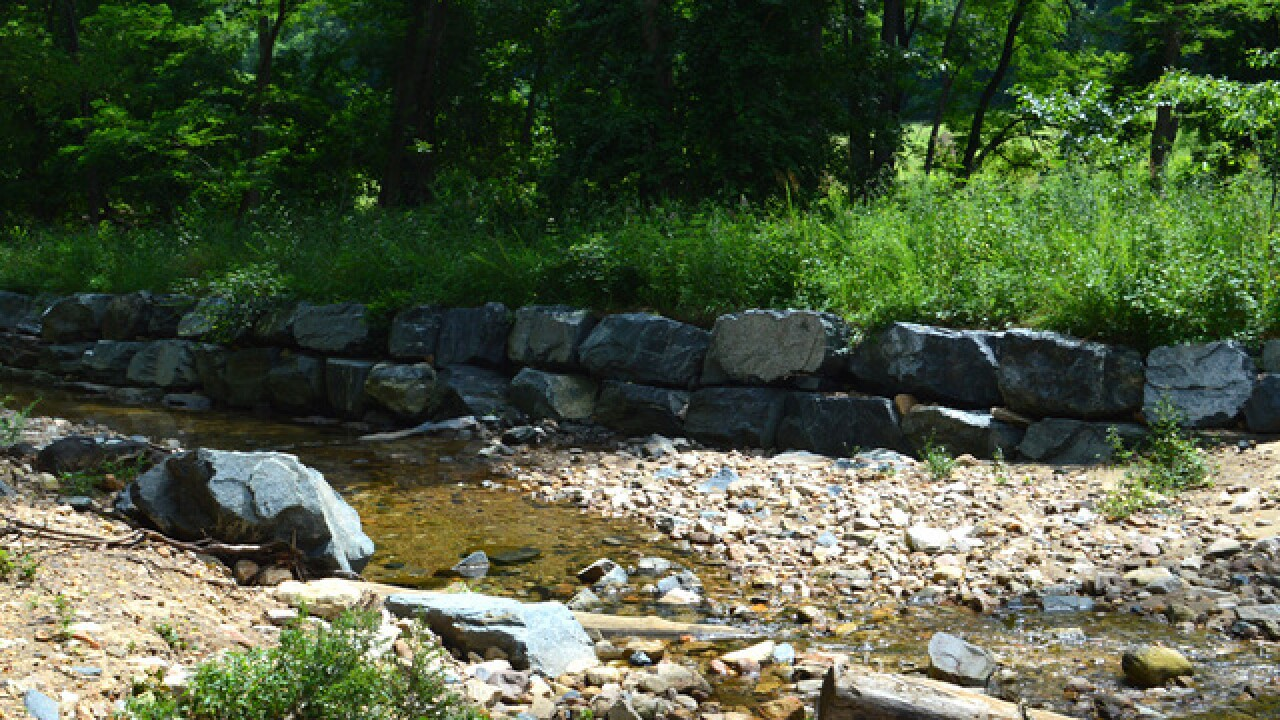 Birds, hiking and nature at Cromwell Valley Park