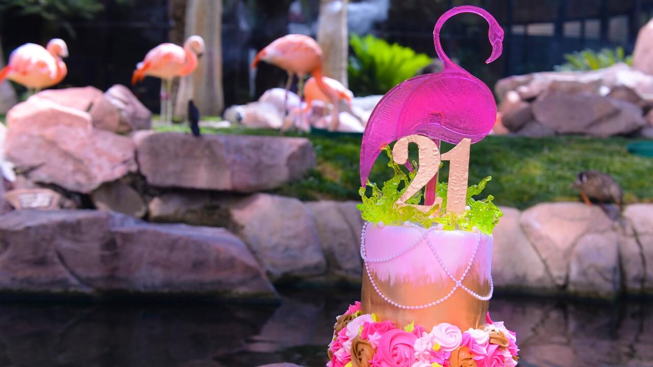 Flamingo Las Vegas_Wildlife Habitat_Peachy's Birthday_BSP_7394.JPG