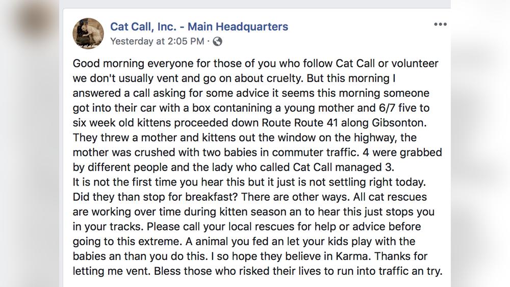 cat-call-FB.png