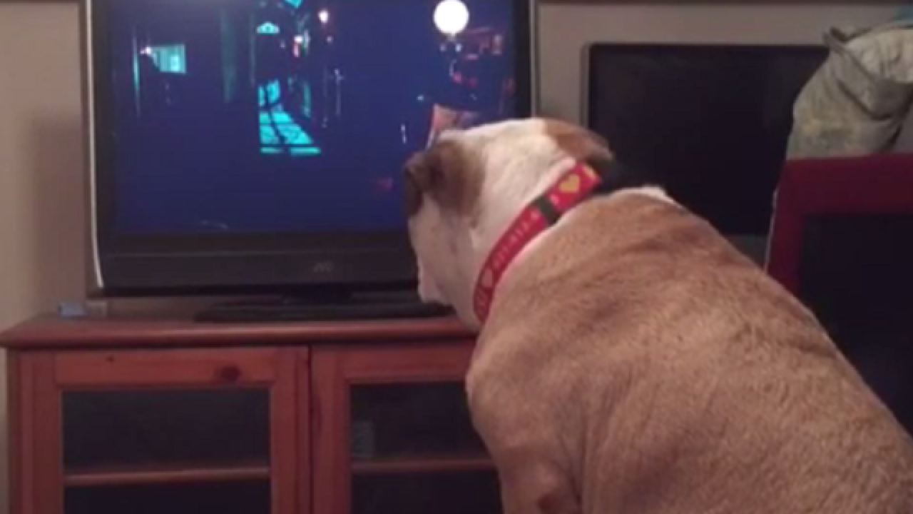 WATCH: Dog tries to protect young girl in horror movie