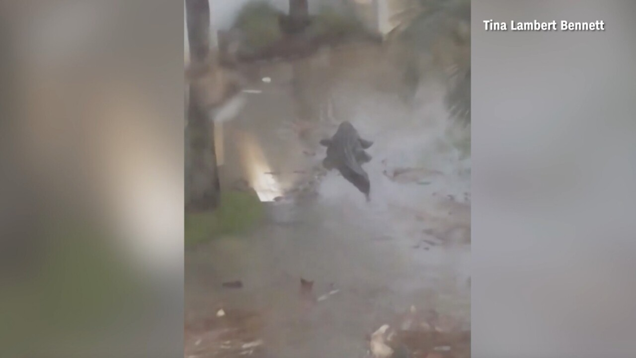 Alligator spotted in Alabama storm surge caused by Hurricane Sally