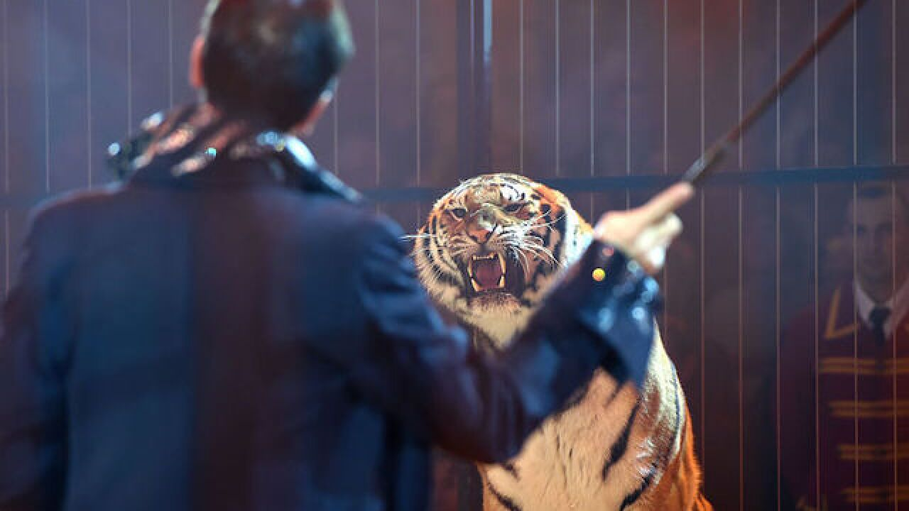 Tiger escapes Paris circus, killed by handlers