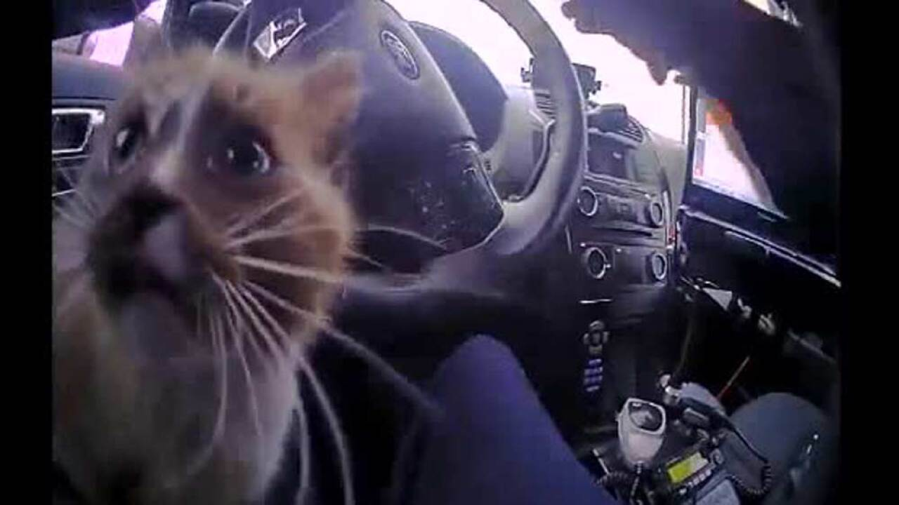 Watch: Missouri police officer rescues kitten from interstate barrier wall, later adopts it