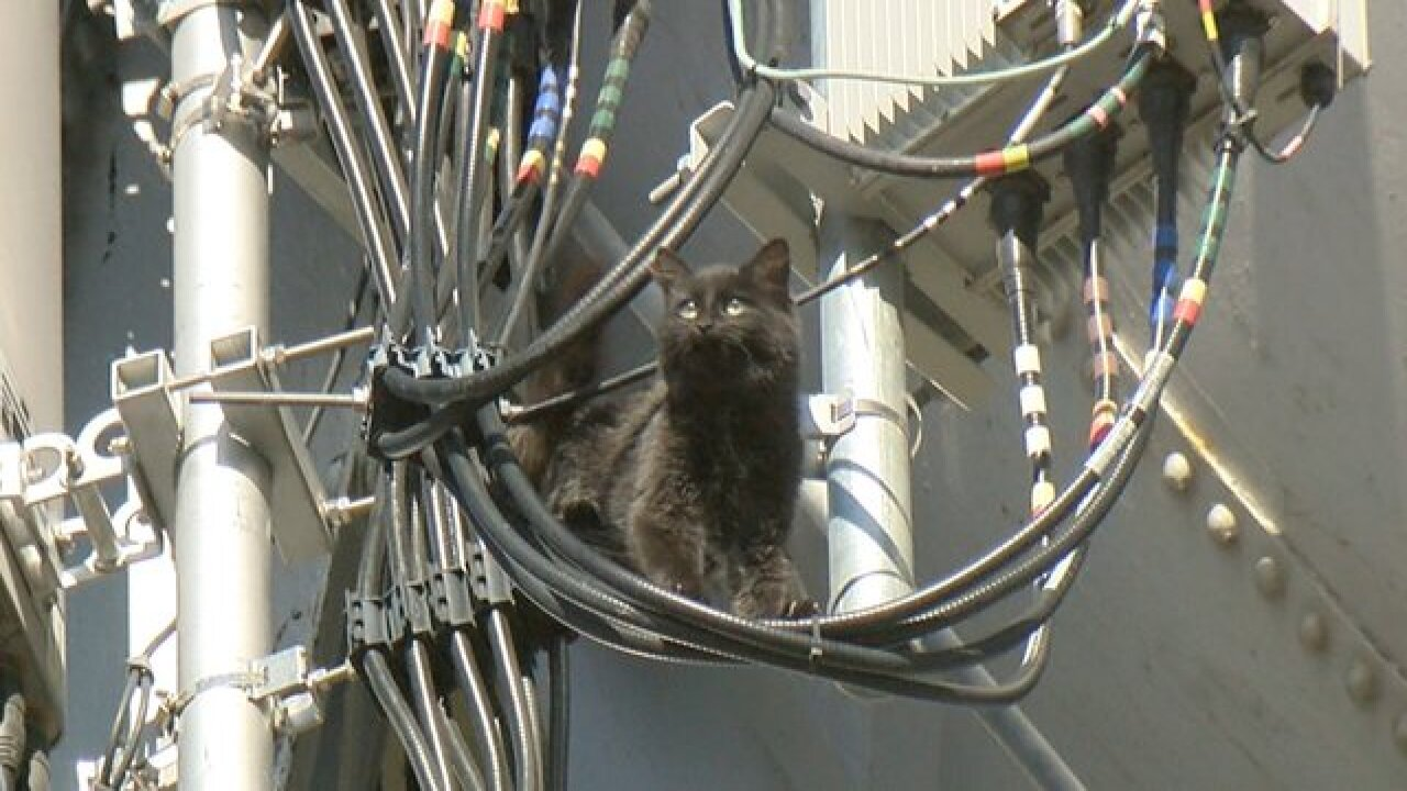 Rescue operation underway for cat stuck on water tower