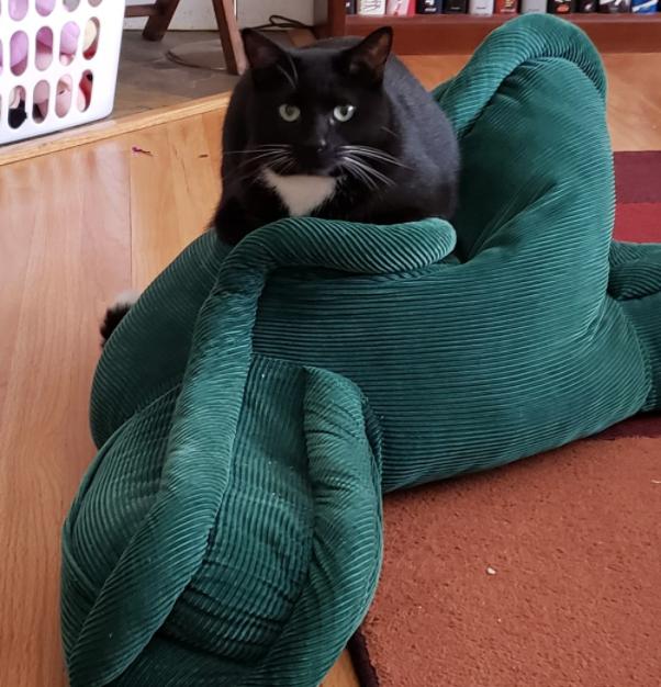 Black Cat 8.png