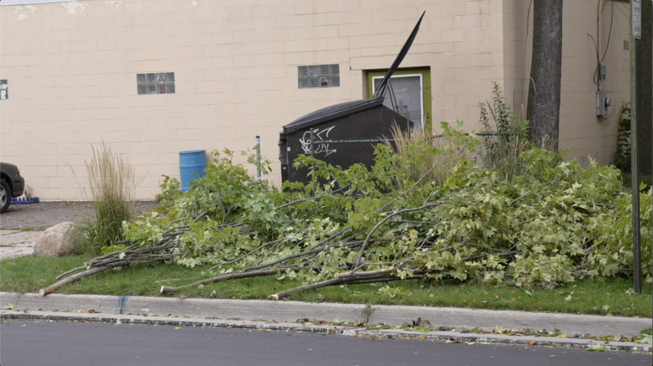 Parts cut off a tree on Hillsdale St. in Lansing