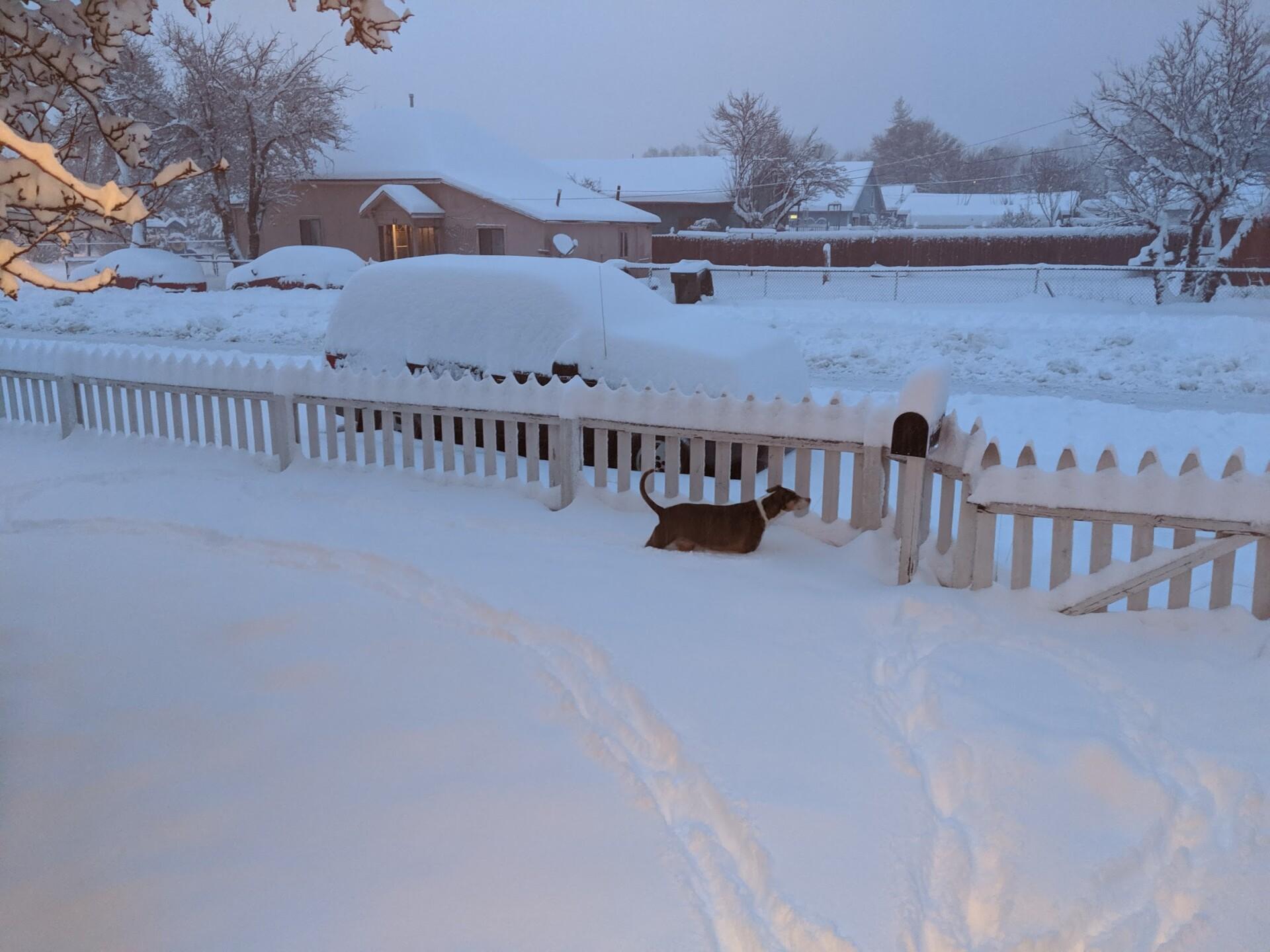 Toni_Simonsen_dog_in_snow_.jpg