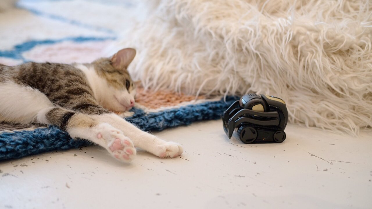 There's a good reason why these tiny robots are taking pictures of cats