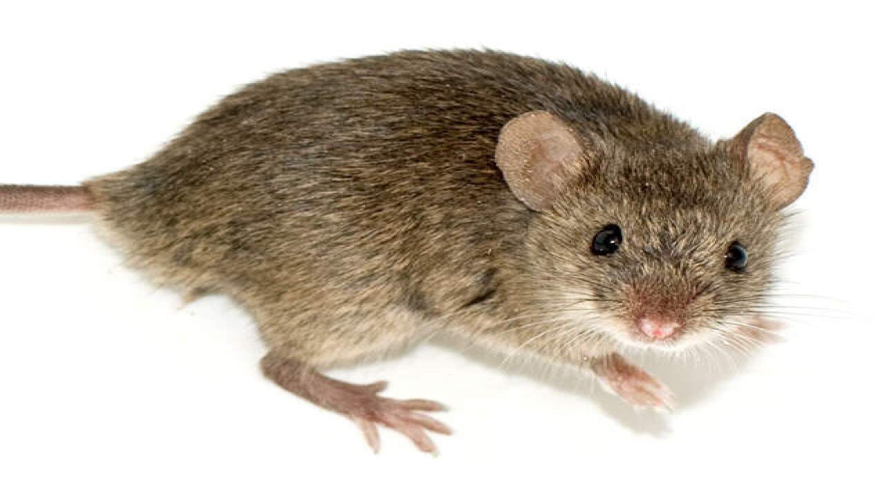 Mouse causes flight delay