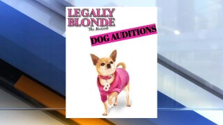 Legally Blonde Dog Auditions