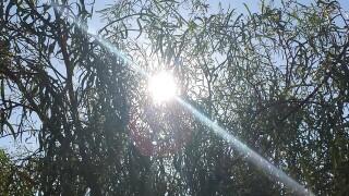 Excessive heat warning for Phoenix