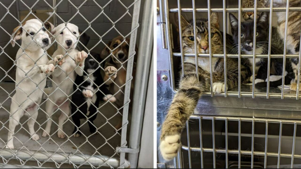 30 animals rescued from Virginia shelter ahead of heartbreaking 'holiday tradition'