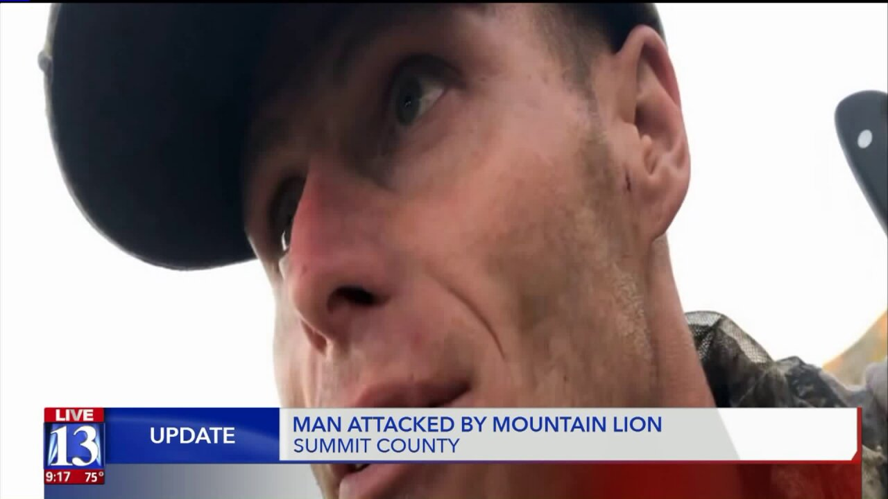 Utah bowhunter fights off attacking mountain lion
