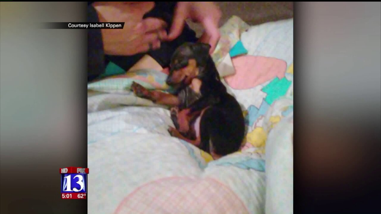 Utah family warns buyers to be wary after puppy dies days afterpurchase