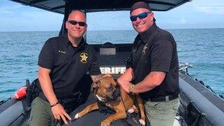 wptv-martin-county-puppy-rescue-.jpg