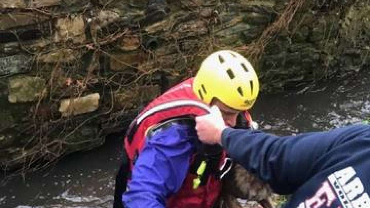 Dog rescued in stream in Arbutus