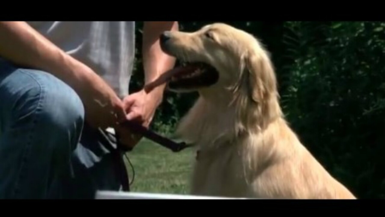 Wisconsin residents save golden retrievers from China meat trade
