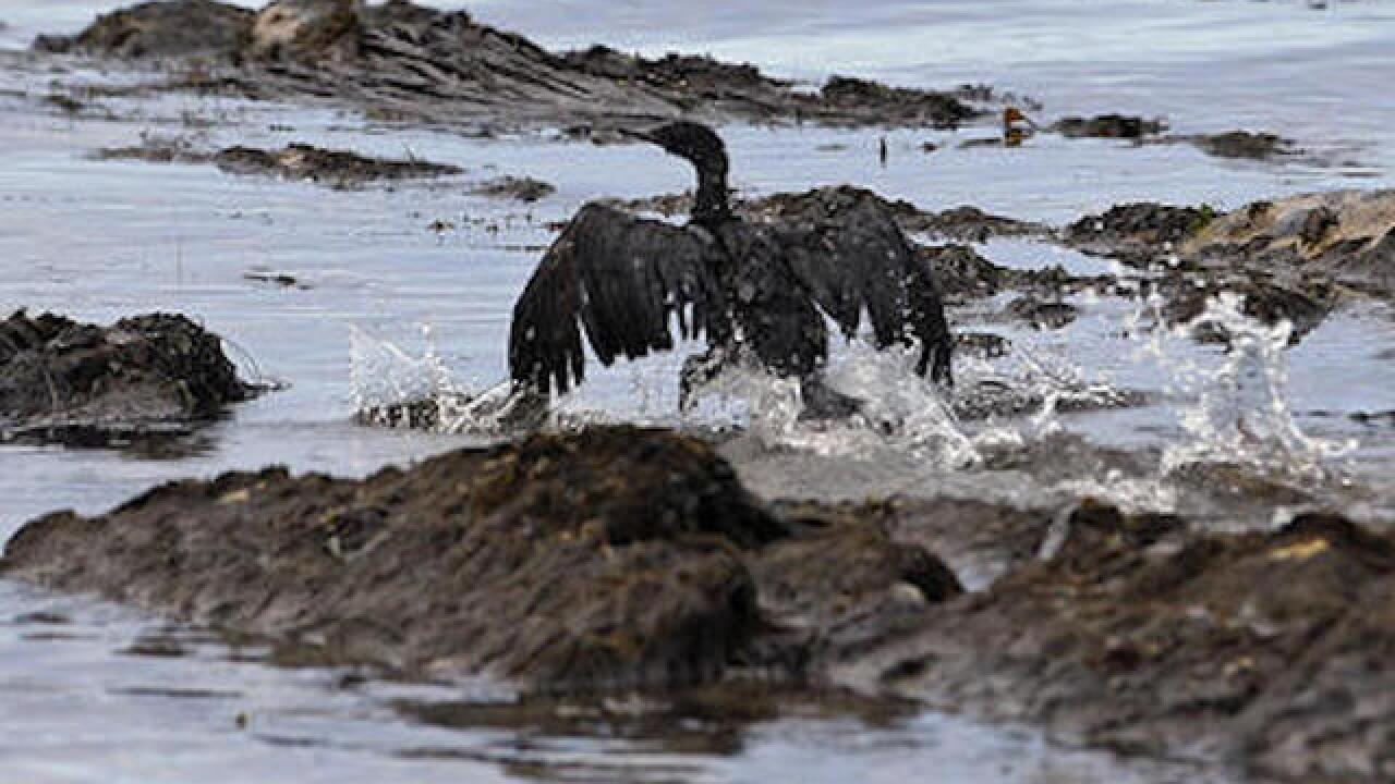 Up to 210,000 gallons of oil spills from California pipeline